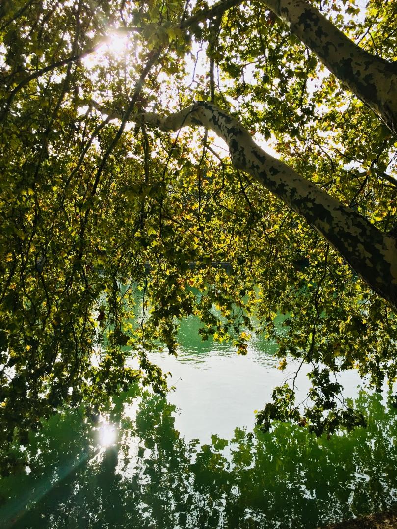 automne_tree_bordsdemarne