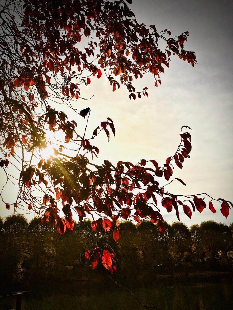 automn_leaves_bordsdemarne